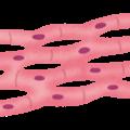 body_cell_shinkin